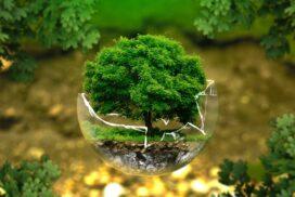 50 интересных фактов об экологии