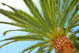 NoonPost (Египет): пальма — эффективное оружие про