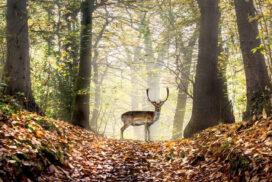 Как меняется поведение животного от встречи с чело