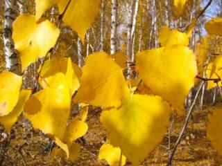 О переработке листвы на примере Беларуси. Все в дело!