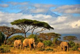 7 советов для необычного путешествия по Африке