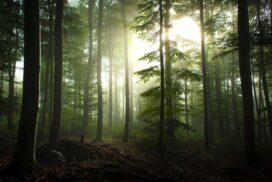 Три простые привычки, которые спасут леса